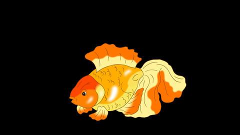 [alt video] Goldfish Floating in Aquarium Alpha Matte