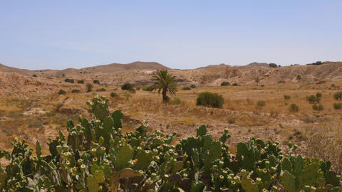 Cacti and palm trees in hot Sahara and desert dunes landscape Live Action
