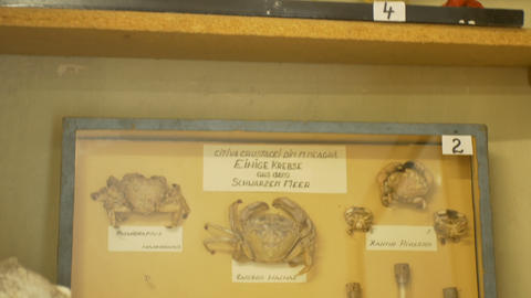 Biology Old Laboratory Cabinet Live Action