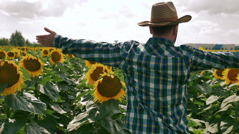 Happy farmer showing the sunflower plantation field Footage