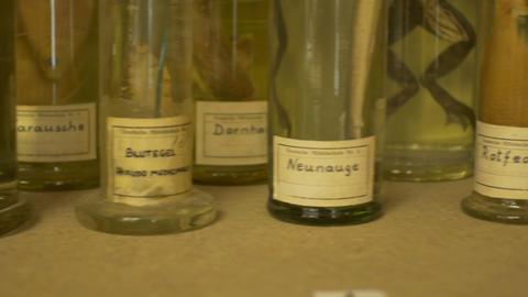 Glasses and Jars of Zoological Specimen Live Action