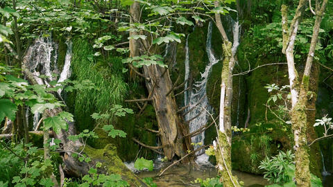 Small waterfalls between wood and green moss in slow motion Live Action