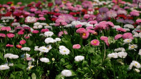 Spring flowers pack Stock Video Footage