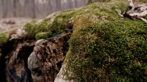 Spring Forest with Green Moss Close Up Live Action