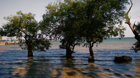 Trees in the sea water when the tide is high Footage