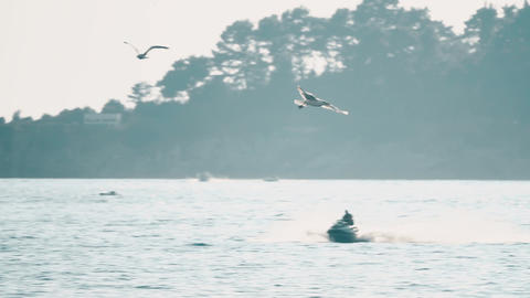 Slow motion shot of sea gull flying over moored boats at the sea Footage