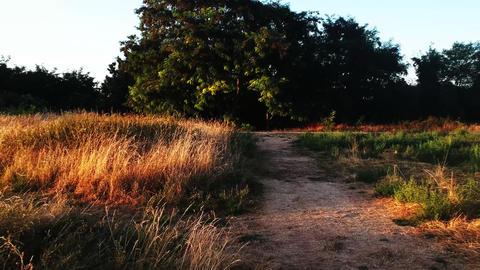 Path to the dark 영상물