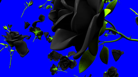Falling Black Roses On Blue Chroma Key Animation