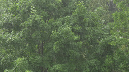 4K Heavy Rain Downpour in the Forest Footage