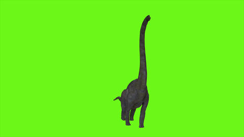 Dinosaur Braquiossauro animation on green screen. Realistic render Animation