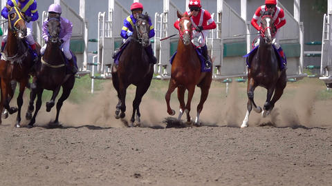 Start of the Horse Racing at the Racetrack Live Action