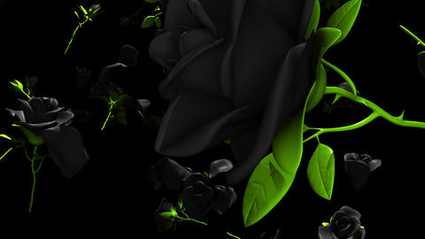Falling Black Roses On Black Background Animation