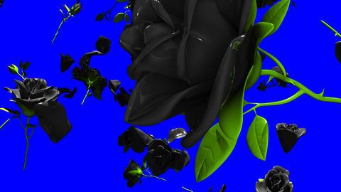 Falling Black Roses On Blue Chroma Key Animation