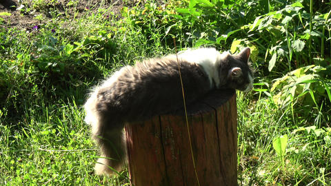 cat resting on decorative tree trunk in garden Footage