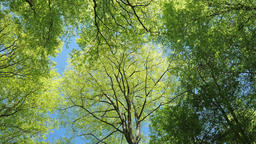 Sun shines through the trees. Oxygen production. Photosynthesis Live Action