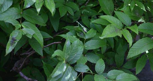 Praying Mantis on tree leaves GIF