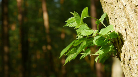 Close up of branch bright green young leaves GIF