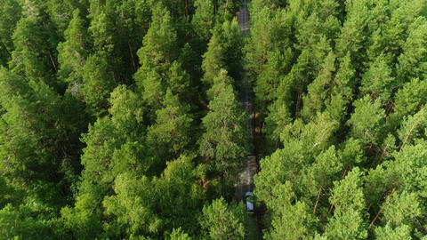 flight above pine tree tops along asphalt road with driving white cars ビデオ