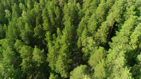 bird eye flight boundless taiga with lush spruces in summer Footage