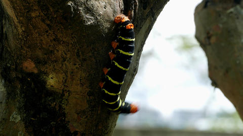 Butterfly Larva Live Action