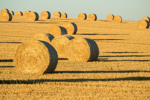 Hay bales on the field after harvest. Agricultural field Photo