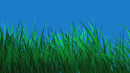 Grass growing against blue background Animation
