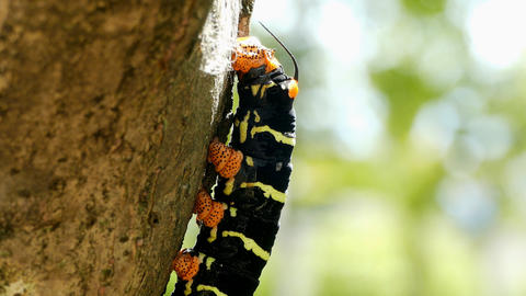 Butterfly Larva GIF