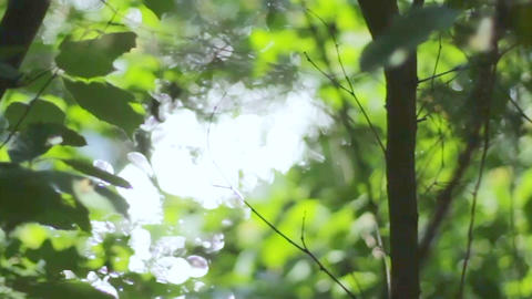 Beautiful fuzzy transfusion of light through green leaves of trees. natural GIF