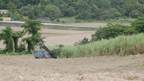 Sugarcane harvest2 Footage