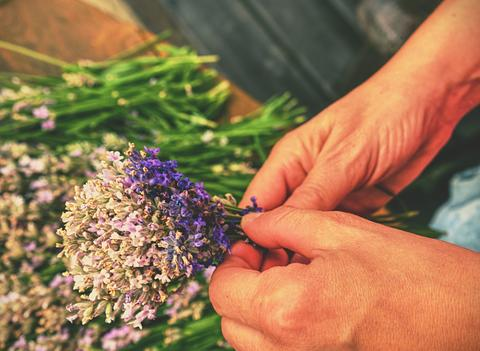 Woman hands binding lavender flowers with scissors and string フォト