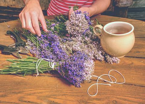 Beautiful smell violet wild Lavender bouquet in the hand, scissors Fotografía