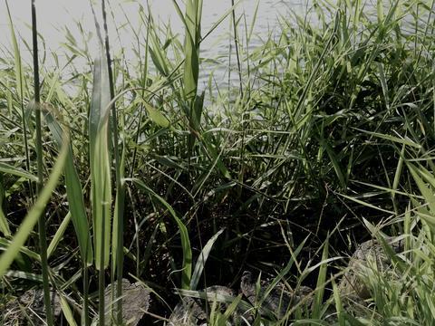 grass near the lake Photo