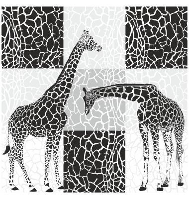 Giraffe patterns for wallpaper Photo