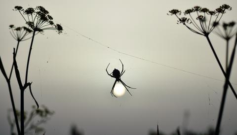 Spider at sunrise フォト