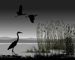 Illustration herons ベクター