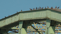 Birds Land and Sit Atop Bridge Footage