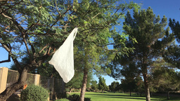 Plastic Bag Hangs from Tree GIF