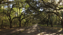 Tracking Shot of Mossy Trees at Wormsloe Plantation Footage