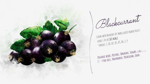 Animated information about the benefits of Blackcurrant Animation