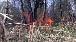 Flames in forest is cause of fire Footage