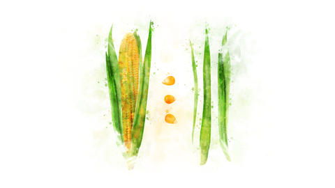 Animation of Corn on the alpha channel Animation