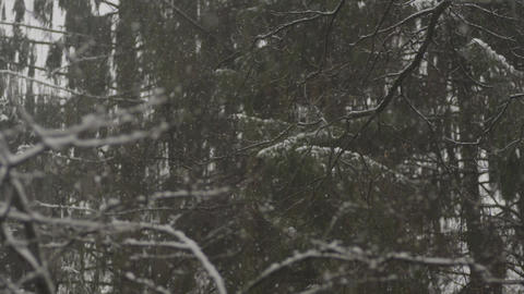 Snowing winter forest snow cold Footage
