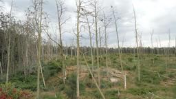 Birds nature reserve/sanctuary. Cormorants nests on a dead trees 영상물