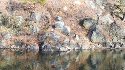 Great Falls National Park, USA river reflection in Virginia and Maryland Footage