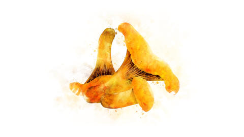 Chanterelle on the alpha channel Animation