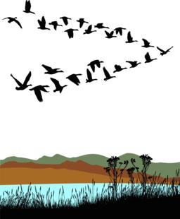 Migrating wild geese over autumn landscape ベクター