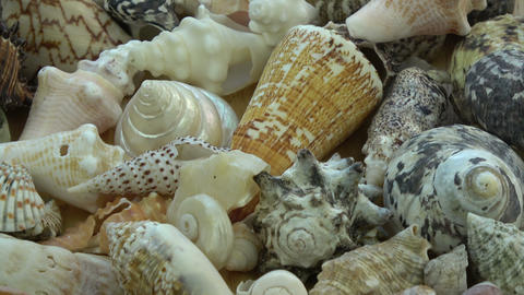 sea shell collection rotating background Footage