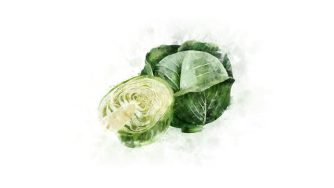 Cabbage on a transparent background Animation