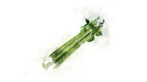 Celery, animated illustration Animation