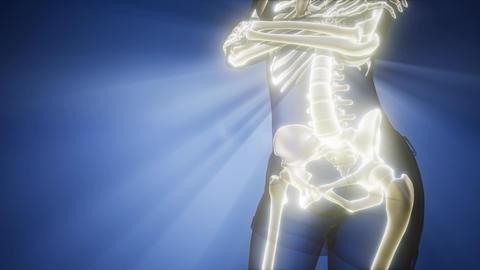 human bones radiographic scan. medical footage Archivo